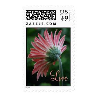 Love stamps pink gerber daisy flower bulk discount
