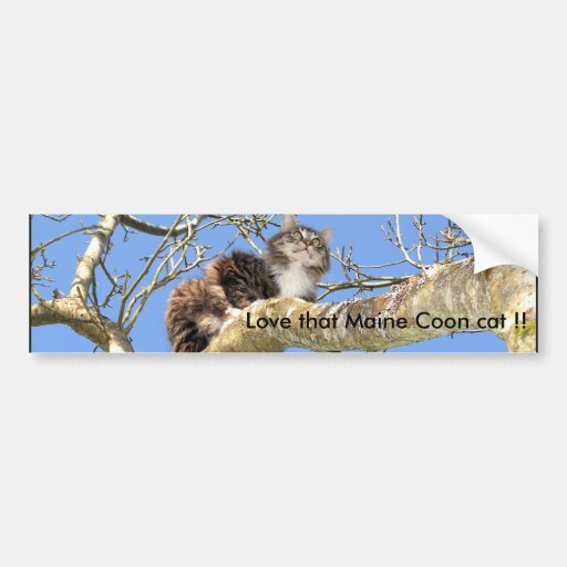Love that Maine Coon cat !! Car Bumper Sticker