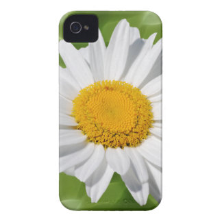 Love the daisy iPhone 4 covers