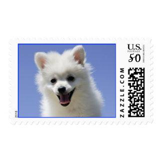Love White American Eskimo Puppy Dog Postage Stamp