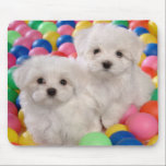 "Love White Bichon Frise Puppy Dog Mousepad<br><div class=""desc"">Aww... Look at that face... who can resist the face of a Bichon Frise puppy? This cute mousepad features two white Bichon Frise puppies playing in colorful rubber balls and sending you lots of love. Doggy mousepads are great decor for home or office... every time you sit at your computer...</div>"