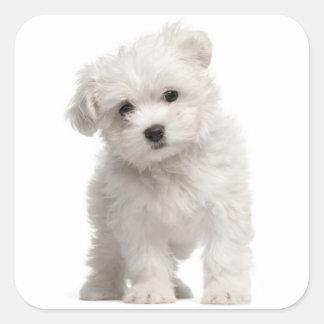 Love White Maltese Puppy Dog Canine Square Sticker
