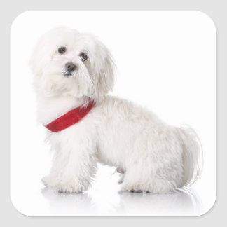 Love White Maltese Puppy Dog Stickers Seal