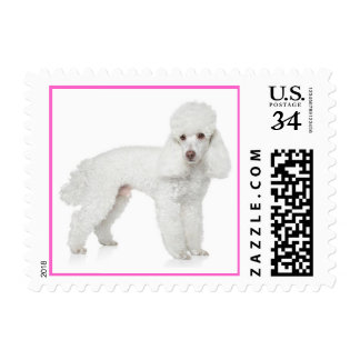 Love White Poodle Puppy Dog Pink Postage Stamps