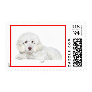 Love White Poodle Puppy Dog Postage Stamps