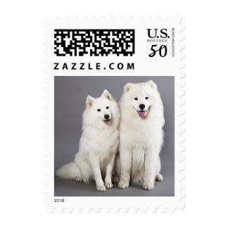 Love White Samoyed Puppy Dog Gray Postage