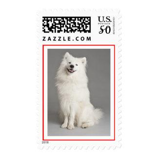 Love White Samoyed Puppy Dog Postage Stamps
