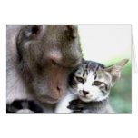 Love you no matter who you are Monkey with cat Greeting Card