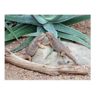Love you_Reptiles Postcard