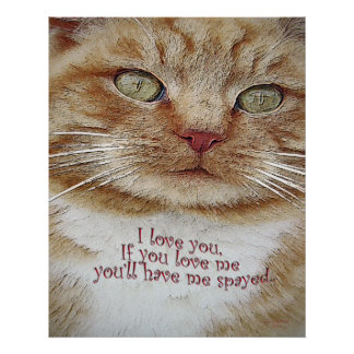 love you spay me poster