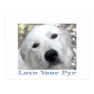 love Your Pyr Great Pyrenees Blue  cards