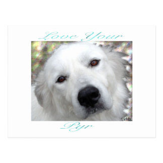 Love Your Pyr Great Pyrenees Teal Postcard