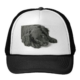 Loveable cute puppy trucker hat