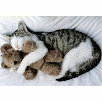 loveable kitty photo cutouts