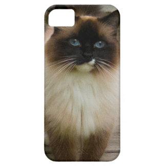 Loveable Ragdoll Cat iPhone SE/5/5s Case