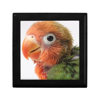 Lovebird chick on white background. jewelry box