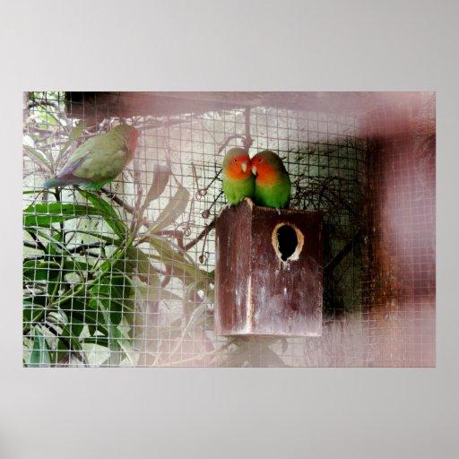 Lovebird de espionaje poster