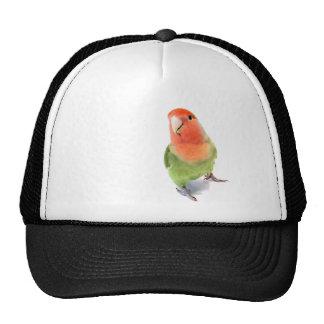 Lovebird on White Trucker Hat
