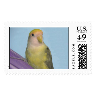 Lovebird Postage Stamp