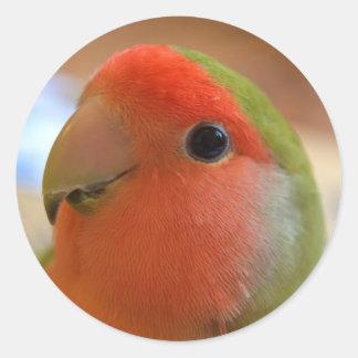 Lovebird sticker