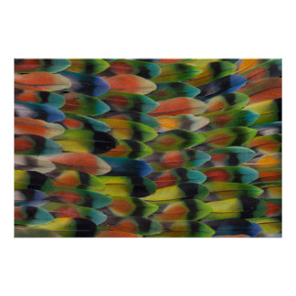 Lovebird Tail Feather Pattern Poster