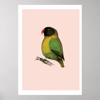 lovebird, tony fernandes poster