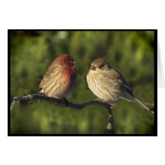 Lovebirds Easter