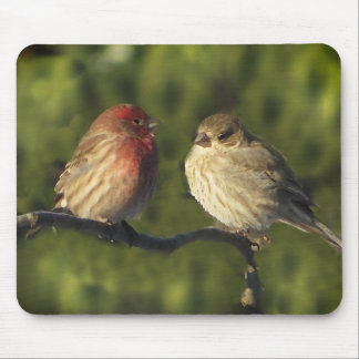 Lovebirds House Finch Birds Mouse Pad