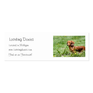 Lovebug Doxies business cards