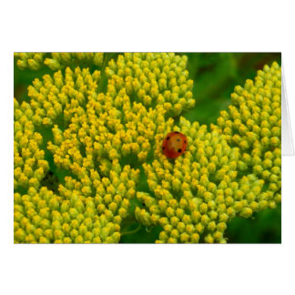 Lovebug - Marienkäfer Grußkarten