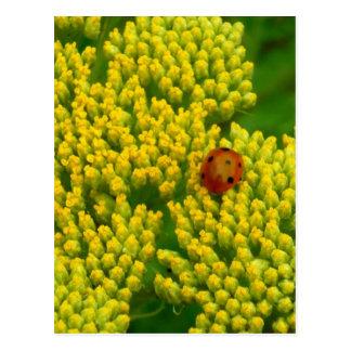 Lovebug - Marienkäfer Postkarten