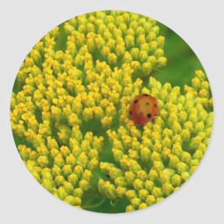 Lovebug - Marienkäfer Sticker