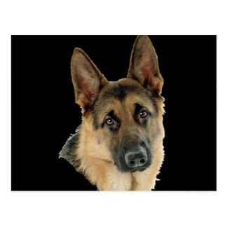 Loved & Protected By A German Shepherd Postcard