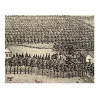 Loveless Farm, Nebraska Postcard