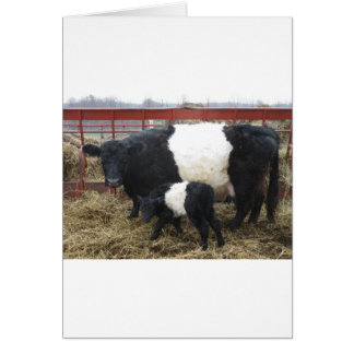 Lovely Beltie Cow and Calf Card