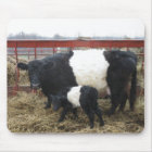 Lovely Beltie Cow and Calf Mouse Pad