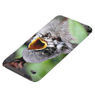 lovely bird iPod touch cover
