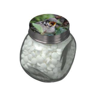 lovely bird jelly belly candy jar