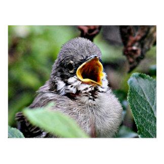 lovely bird postcard