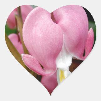Lovely Bleeding Heart Blossom Sticker