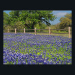 "Lovely Bluebonnets in Texas Photo Print<br><div class=""desc"">Original Photograph Print - Texas Bluebonnets in the Spring,  everywhere along the highways and pastures.</div>"