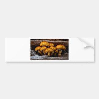 Lovely Bunch of Wild Mushrooms Bumper Sticker