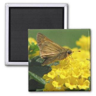 Lovely  Butterfly Fridge Magnet