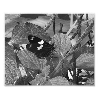 Lovely Butterfly on Leaf in Black and White Photo Print