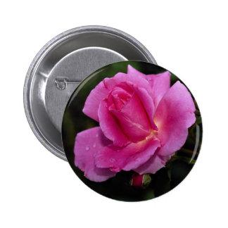 Lovely Carefree Beauty Shrub Rose 'Bucbi' Pinback Button