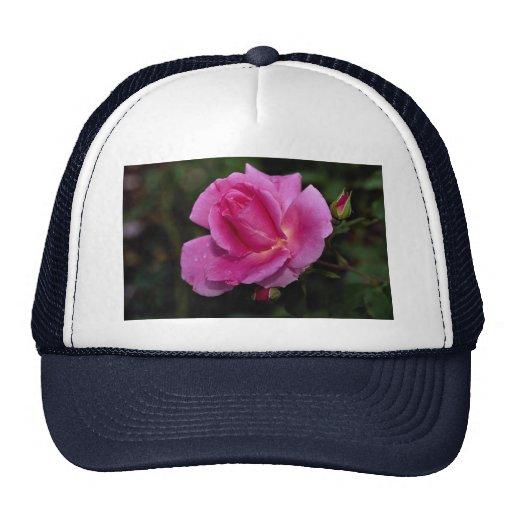 Lovely Carefree Beauty Shrub Rose 'Bucbi' Mesh Hats