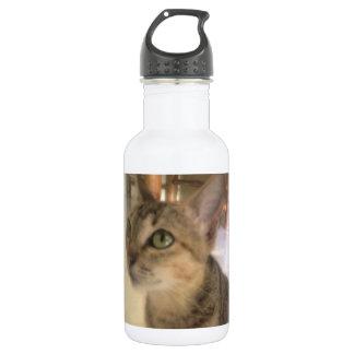 lovely cat water bottle