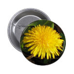 Lovely Dandelion 2 Inch Round Button