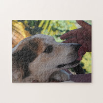 Lovely Dog – Playing with her Owner Photo Puzzle