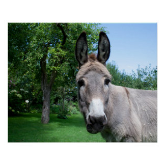 Lovely Donkey Portrait Poster